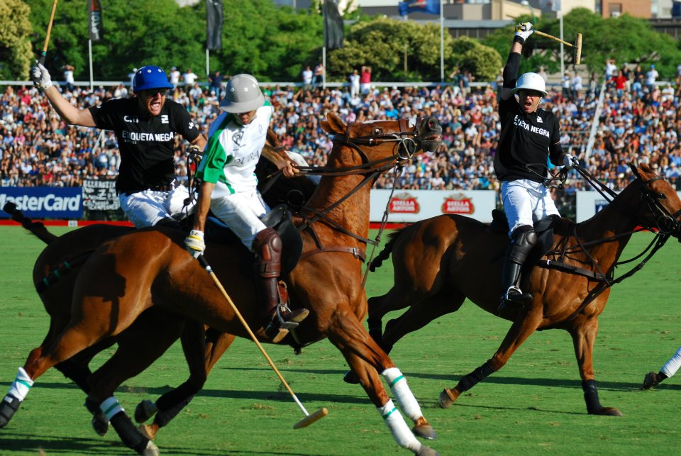 POLO HORSES: BREEDS, CHARACTERISTICS AND ADAPTABILITY