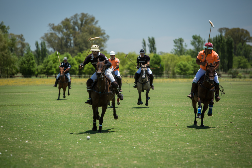 WHAT TO CONSIDER FOR CHOOSING A HORSE TO PLAY POLO