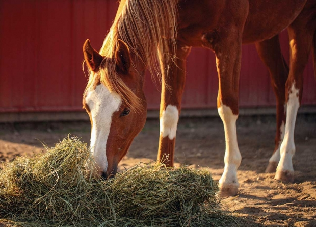 HORSES NEED TO EAT ALSO DURING THE NIGHT