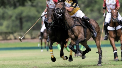 Polo horses on a Polo match