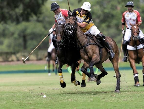 Polo horses on a Polo match