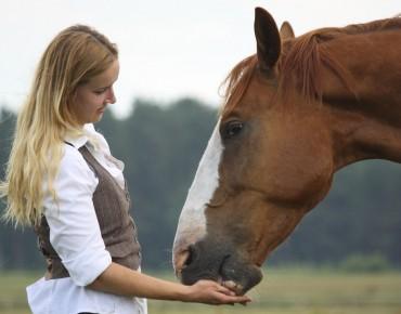 treats for polo horses