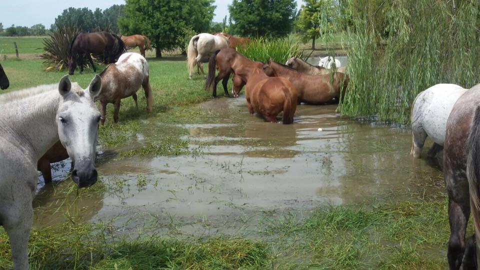 cuidado del caballo de polo