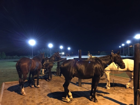 HorsesNightVision | Argentina Polo Day