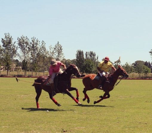 Get Ready to Play Polo in Argentina