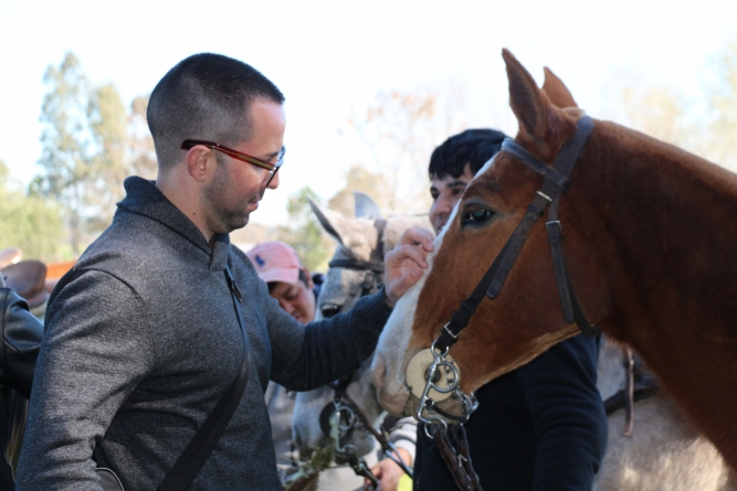 Equitherapy: Therapy with Horses