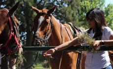 Técnicas alternativas de entrenamiento de caballos de polo