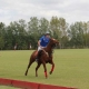 What to consider for choosing a horse to play polo | Argentina Polo Day
