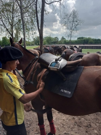 How to Prepare Your Horse for a Polo Match?