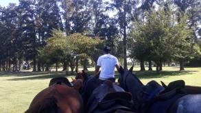 ¿Cuántos caballos se necesitan para jugar al polo?