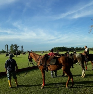 How many horses does it take to play polo?