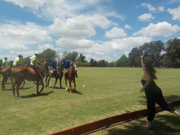 Horses in a Polo Match