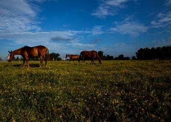 ¿ Como elegir un caballo de Polo ?   Argentina Polo Day
