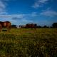 ¿ Como elegir un caballo de Polo ? | Argentina Polo Day
