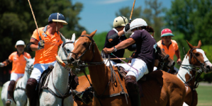 Suitable Polo Equipment for a Match