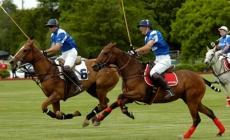Treats for Polo Horses   Argentina Polo Day