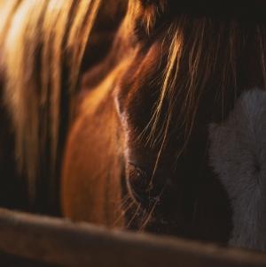 Horses Dreaming