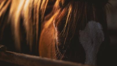Do Horses Dream When They Sleep?