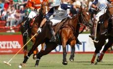 Polo Basics Characteristics | Argentina Polo Day