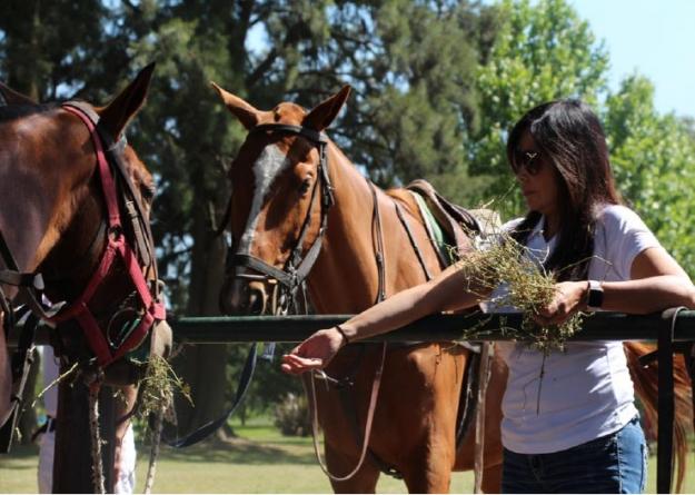 Understanding the Human-Horse Relationship