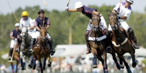 Taming of a Polo Horse: The Process