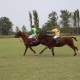 Polo Match: The Basic Guide To Understand