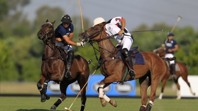 Polo Pony | The Argentine horse race