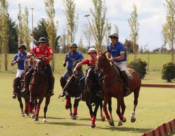 Polo Curiosities | Argentina Polo Day