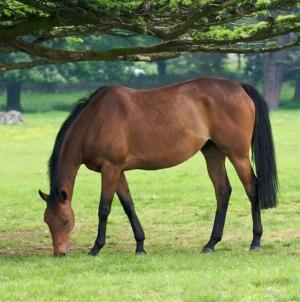 Golosinas para Caballos | Living Polo