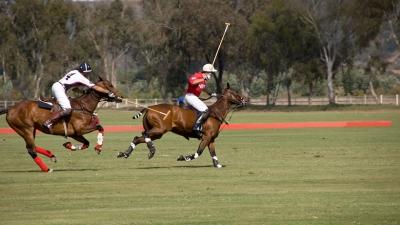 El caballo de polo y su alimentación   Argentina Polo Day