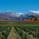 Exploring Local Flavors: ARGENTINA WINES