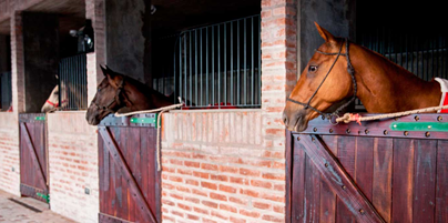 Where do Horses Live in Argentina?